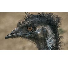 Emu Profile View Photographic Print