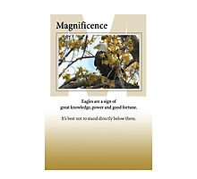 Magnificence Photographic Print