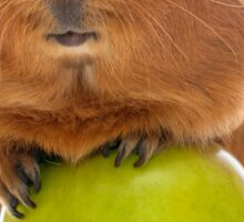 guinea pig and the green apple Sticker