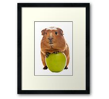 guinea pig and the green apple Framed Print