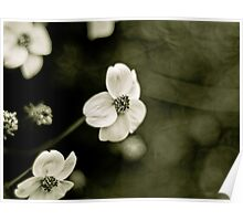 Ranunculus acris Poster
