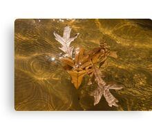 Honey Colored Sun Flares - Oak Leaves Floating in a Fountain Canvas Print