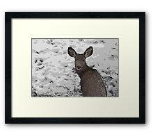 Cold Winter Survival Framed Print