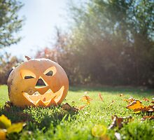 Halloween pumpkin on grass and leaves in the garden in nice sunny day by odstrcil