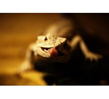 iguana tongue Photographic Print