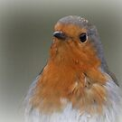 The Robin by Thea 65