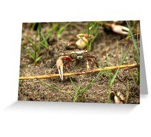 Shem Creek Crabs Greeting Card
