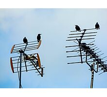 airal birds  Photographic Print