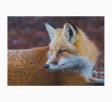 Red fox (Vulpes vulpes) in Algonquin Park Kids Tee