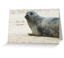 Seals Of Blakeney (1) Greeting Card