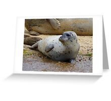 Seals Of Blakeney (2) Greeting Card