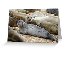 Seals of Blakeney (3) Greeting Card