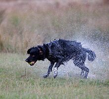 very wet dog by Keith Larby