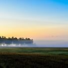Misty morning by Mark Williams