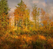 AUTUMN GLORY by leonie7