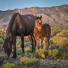 6-Last wild horses in Nevada by photo702