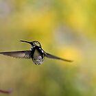 Freebird by Adam Bykowski