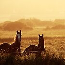 7.9.2014: Horses, September Evening by Petri Volanen