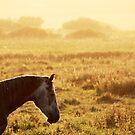 7.9.2014: Horse on Pasture by Petri Volanen
