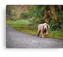 Lonely walker Canvas Print