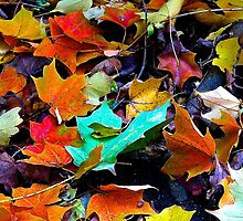 Autumn Leaves by christazuber