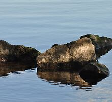 Rocks and Reflection, Bayfront Park by srosu