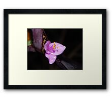 little purple Framed Print