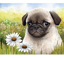 Dog 114 Pug Photographic Print