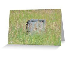 TV in the wild Greeting Card