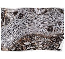 Starry Starry... Tree Stump. Poster