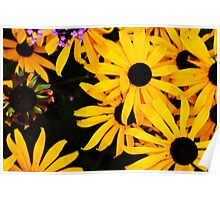 Black and Yellow Bee Daisies Poster