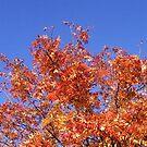 Autumn i-Phone cover & card design by biddumy