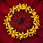 The Crown of Zinnia (or Ring o Stars) by Yampimon
