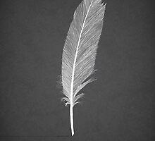 Black Swan by Martin Lucas
