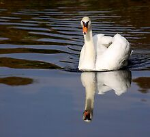 Mute Swan Reflection by Jo Nijenhuis