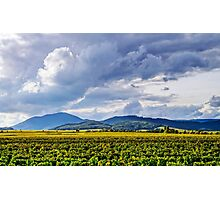 Beautiful sunlight over vineyards with blue sky and mountains on horizon, Alsace, France Photographic Print