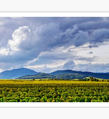 Beautiful sunlight over vineyards with blue sky and mountains on horizon, Alsace, France Sticker