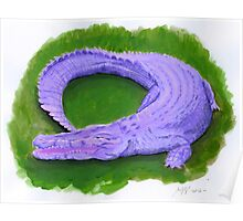 Aligator crocodile purple green  Poster