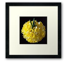 Daffodils ball Framed Print