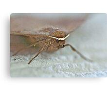 Bat Moth -Da Da Da Da - Da Da Da Da - Bat Moth Canvas Print