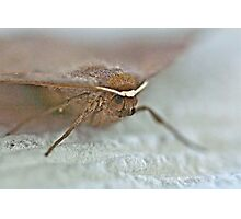 Bat Moth -Da Da Da Da - Da Da Da Da - Bat Moth Photographic Print