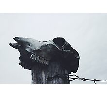 Ugly To The Bone Photographic Print