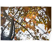 Epitome of Fall Poster