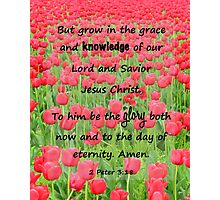 Red Tulip Fields - 2 Peter 3:18 Bible Verse Photographic Print