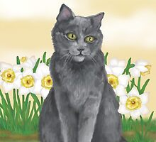 Django Amongst the Narcissus  by Kim  Harris