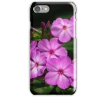 Lovely Sweet William iPhone Case/Skin