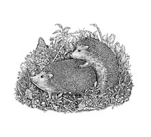 The Hedgehogs Photographic Print