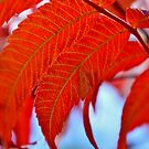 Sumac Leaves by Kathleen Daley