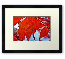 Sumac Leaves Framed Print