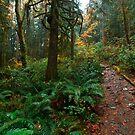 Rain Forest by David Lamb